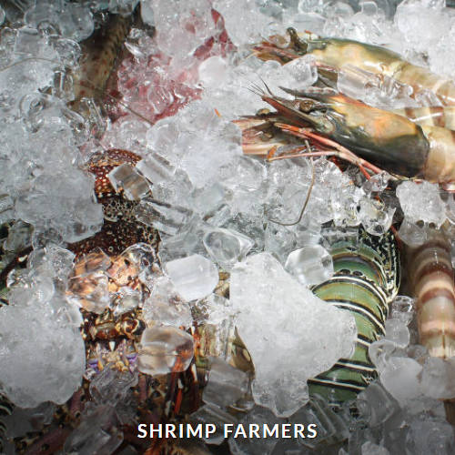 Shrimp Farmers